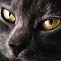 Cats Live Wallpaper icon