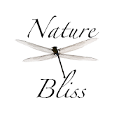 Meditation Music: Nature Bliss