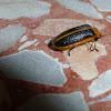Firefly/Lightning Bug