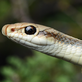 SoCal Reptiles and Amphibians