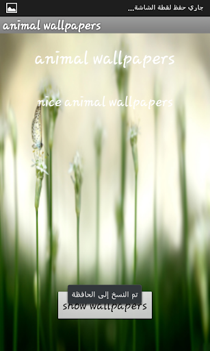 玩攝影App|7- Animals wallpaper 2014免費|APP試玩