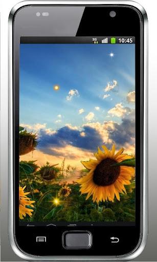 Sunflower Sunset liv wallpaper