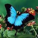 3D butterfly 011 logo