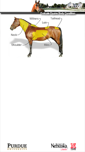 HorseBCS