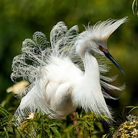 205 egret lge.jpg