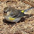 Wild Tennessee Birds