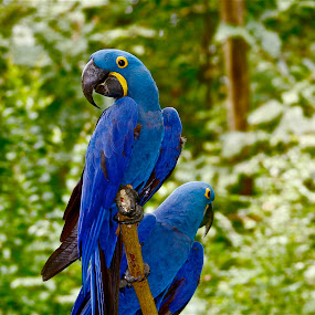 by Alexa Bessler - Animals Birds