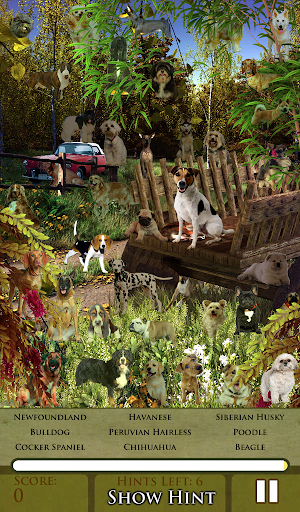 Hidden Object - Let Dogs Out