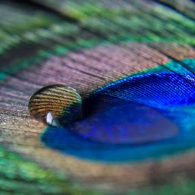by Shivalkar Jha - Abstract Patterns