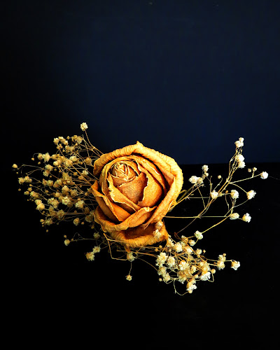 Dried Yellow Rose & Baby's Breath by Jane Spencer - Artistic Objects Other Objects ( rose, dried, dust, baby's breath, dead,  )