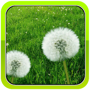 Galaxy S5 Dandelion Wallpaper LOGO-APP點子