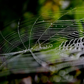 Spider's Pearls 2 by Zec Mladen - Nature Up Close Other Natural Objects ( nature, spiderweb, nature up close, waterdrops, spider web,  )