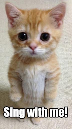 Miley's Cat