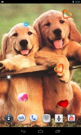 Funny Puppies live wallpaper