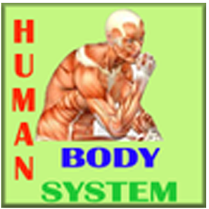essay body systems work together The nervous system and endocrine system how do the nervous system and endocrine system work together a: how does the nervous system work with other body.