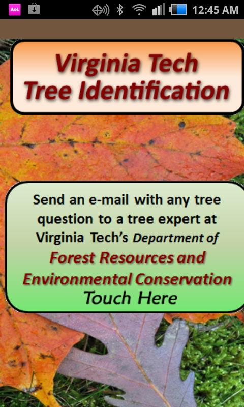 Virginia Tech Tree ID - screenshot