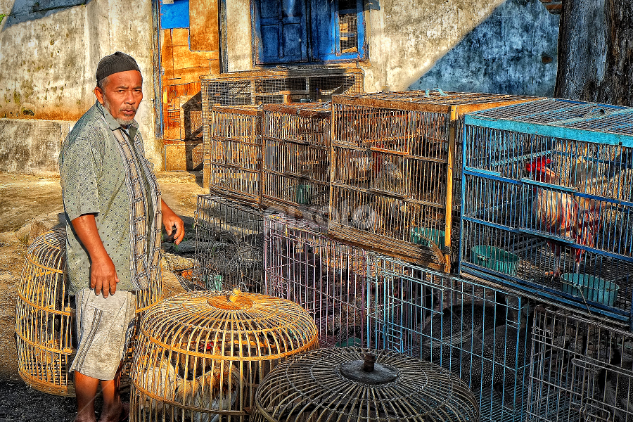 Penjual ayam by Herry Wibowo - People Professional People