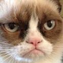 Grumpy Cat icon