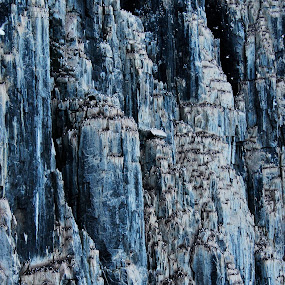 Seabird Rookery, Svalbard Archipelago Fjords by Linda Labbe - Landscapes Mountains & Hills ( water, cliffs, blue, fjords, ocean, rocks, birds, rookery )