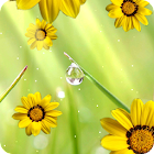 Flores Live  Wallpaper gratis icon