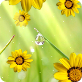 Flower photo Live Wallpaper