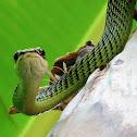 Flying Golden Tree Snake