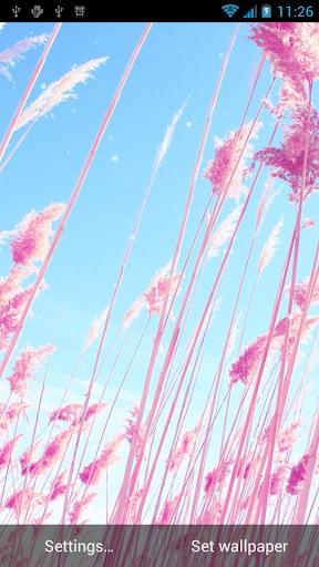 可愛的粉紅色動態壁紙