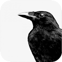 Crow Sound Bird Sounds icon