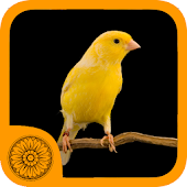 Malika Bird Farm