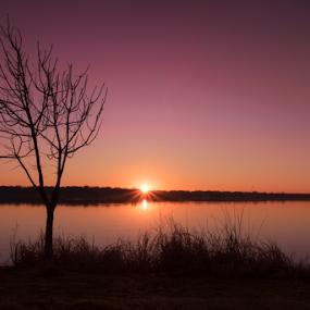 The beam of light by Amitabh Mukherjee - Landscapes Sunsets & Sunrises ( purple, dallas, texas, lake, white rock, rays, streak, sky, tree, color, d750, tones, beam, sunrise, golden,  )