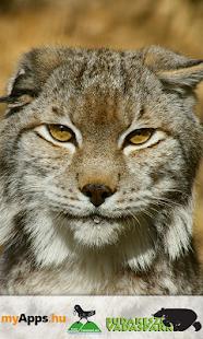 Budakeszi Wildlife Park - náhled