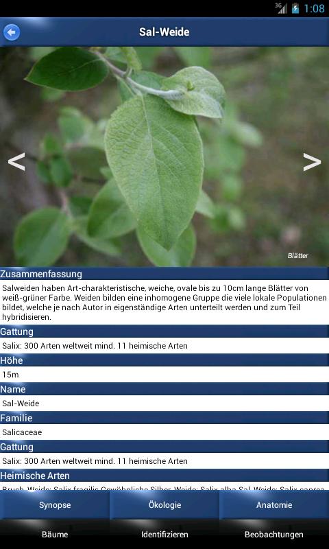 Bäume - arten kennenlernen und bestimmen