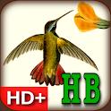 Audubon's Hummingbirds Live WP