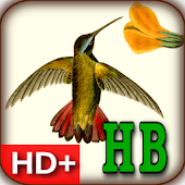 Audubon's Hummingbirds Live WP