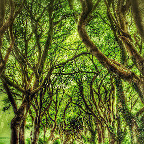 The dark hedges by David Ferris - Travel Locations Landmarks ( game of thrones  dark hedges )