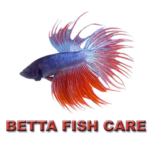 Download Betta Fish Care Apk For Laptop Download Android