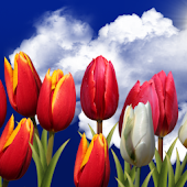 Flowers HD Free Live Wallpaper
