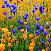 3D flower 66
