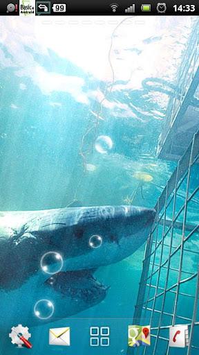 鲨鱼 动态壁纸