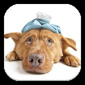 Mascotas, Primeros auxilios