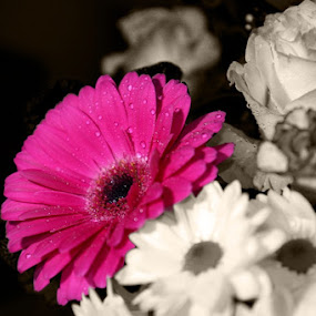 Pink by Carl Kennedy - Flowers Flower Arangements ( selective colour, pink, flowers )