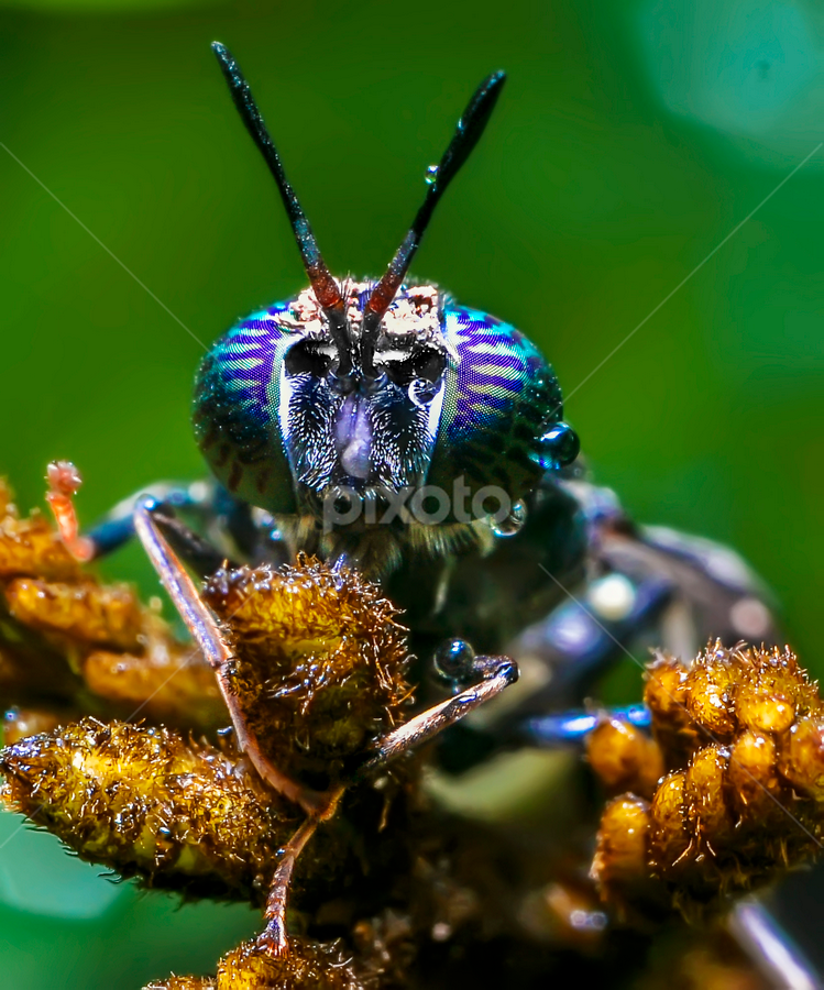 Serangga by Nuge Shetherap - Animals Insects & Spiders