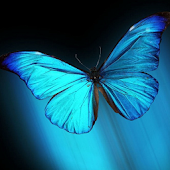 BUTTERFLY GO LAUNCHER HD THEME
