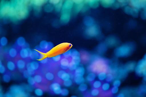 【免費工具App】Tropical fish wallpaper-APP點子