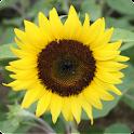 전국꽃배달 꽃넝쿨 logo