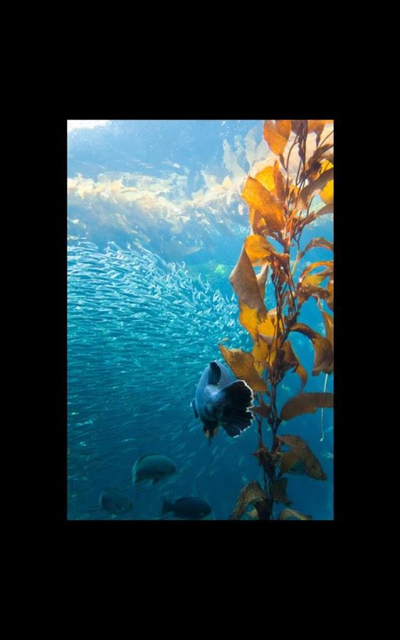 shark aquarium live wallpaper - photo #25
