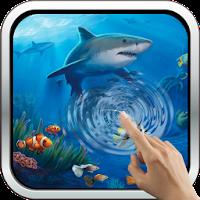 Interactive Shark 6.0
