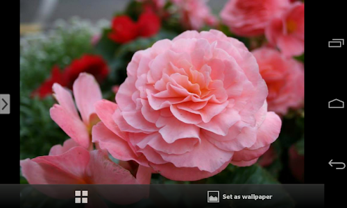 Beautiful Flowers Wallpapers screenshot 1