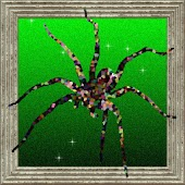 Arachnitap