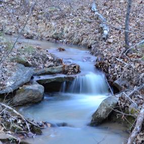 Water flowing over rocks by Norma Moore - Uncategorized All Uncategorized ( water, stream, dead trees, creek, leaves, stones, rocks )